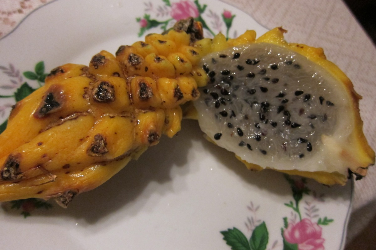 Colombian dragon fruit
