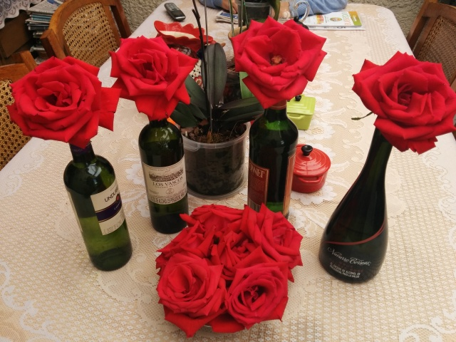 Roses from Don Eloy